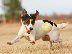 Tout pour le chien - Chien en bonne santé